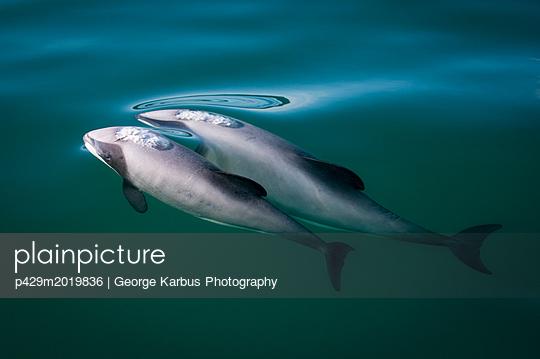 p429m2019836 von George Karbus Photography