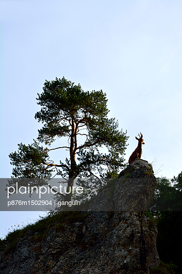 deer at hilltop - p876m1502904 by ganguin
