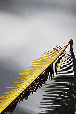 Palm leaf - p258m2278660 by Katarzyna Sonnewend