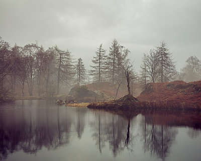 Bare trees surrounding the banks of Holme Fell Tarn on an overcast winters day in the Lake District National Park, UNESCO World Heritage Site, Cumbria, England, United Kingdom, Europe - p871m1554128 by Garry Ridsdale