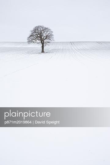 p871m2019864 von David Speight