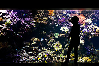 Boy looking at fish in aquarium - p312m2092229 by Peter Rutherhagen