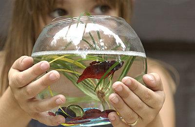 Little girl holding up fishbowl - p3720595 by Stu Mullenberg