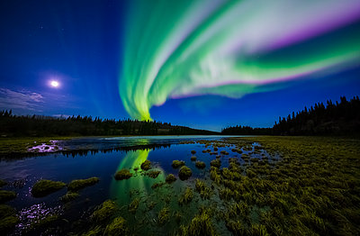 The aurora borealis competes against the moon in the night sky above a partially-thawed beaver pond in the spring; Alaska, United States of America - p442m1225059 by Steven Miley