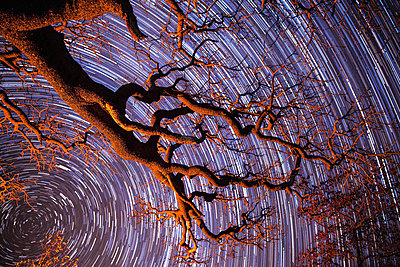 Startrail with tree in silhouette in foreground, Khama Rhino Sanctuary, Botswana, Africa - p871m2209608 by Levon Rivers