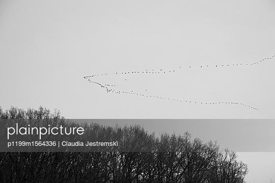 Zugvögel II - p1199m1564336 von Claudia Jestremski