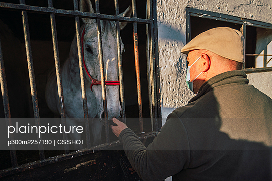 Man wearing protective face mask taking care of horse while standing by stable - p300m2257190 by CSSHOT