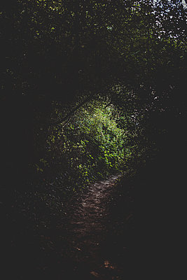 Illuminated pathway under tree canopy - p1628m2196227 by Lorraine Fitch
