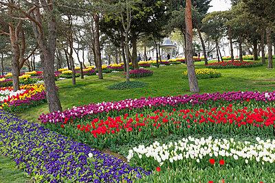Turkey, Istanbul, Uskudar, Bueyuek Camlica, Tulips in park - p300m937514 by Martin Siepmann