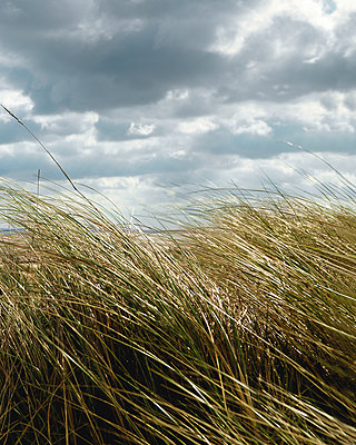 Beach grass under dark sky - p1198m2053974 by Guenther Schwering