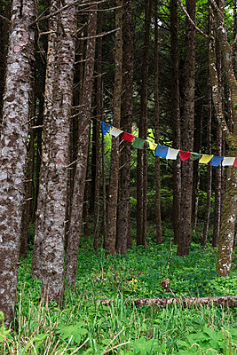 Prayer Flags in a Forest - p1262m1440880 by Maryanne Gobble