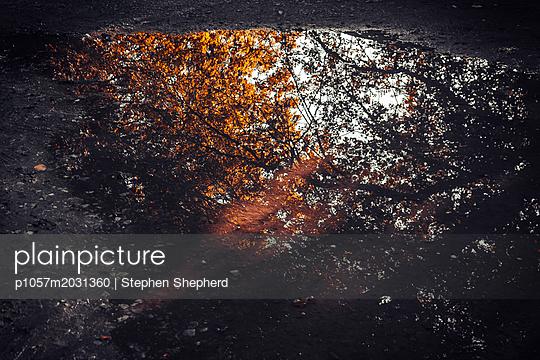 Baumkronen spiegeln sich in einer Pfütze - p1057m2031360 von Stephen Shepherd