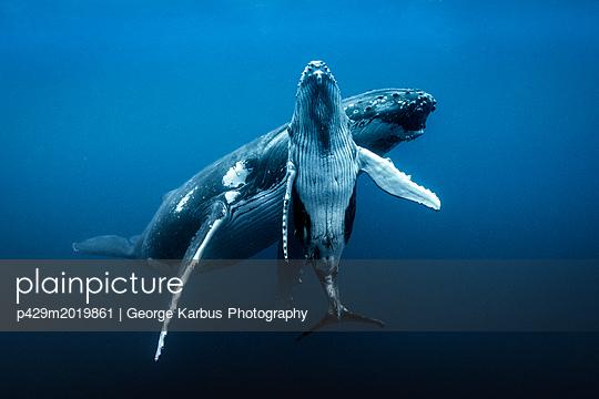 p429m2019861 von George Karbus Photography