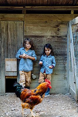 Two kids standing in chicken coop on an organic farm - p300m2144443 von Sofie Delauw