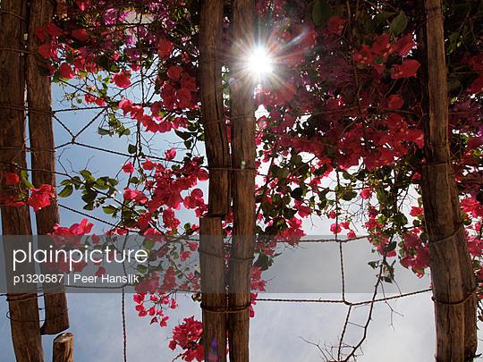 Sonnenlicht durch bepflanztes Dach - p1320587 von Peer Hanslik