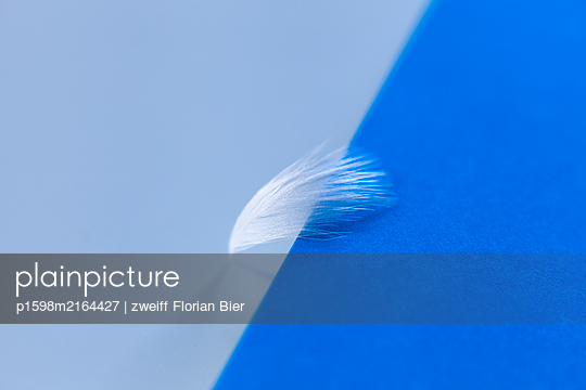 White feather against blue background - p1598m2164427 by zweiff Florian Bier