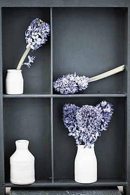Blue hyacinth on shelves - p1470m2030743 by julie davenport
