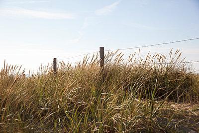 Dünen am Meer, Egmond aan Zee - p902m1057261 von Mölleken