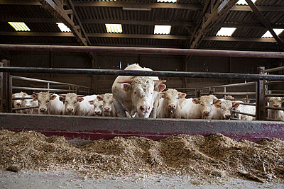 Tierhaltung - p1058m817139 von Fanny Legros