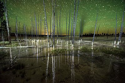 Tranquil view of bare trees against star field at Yellowstone National Park - p1166m1509460 by Cavan Images