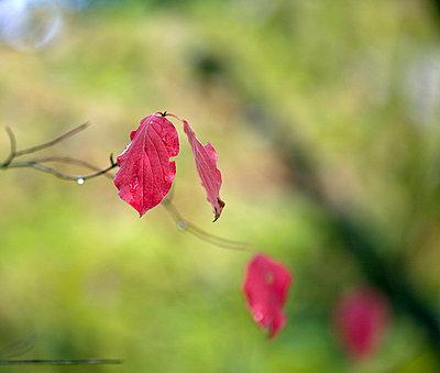 Herbstblätter - p1660639 von Peter Usbeck