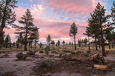 Scenery with evergreen trees at sunset, Mono County, California, USA - p343m1520867 by Suzanne Stroeer