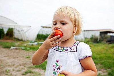 Child eating a frech tomatoe - p8420139 by Renée Del Missier