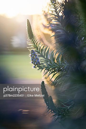 Close-up of flowering bush - p378m2235451 by Elke Meitzel