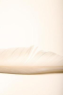 Weiße Feder - p1650858 von Andrea Schoenrock