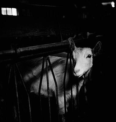Dairy Farm - p6300097 by Suzette Bross