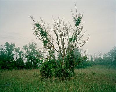 Busch - p972m1333484 von Felix Odell