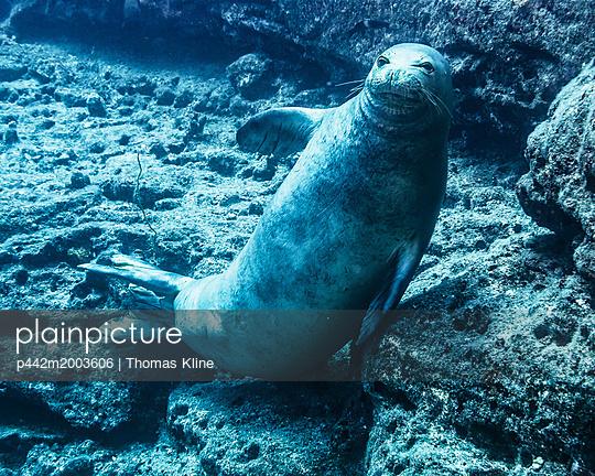 p442m2003606 von Thomas Kline
