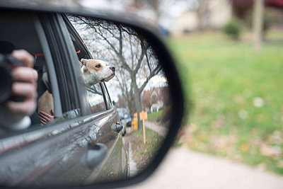 Dog peeking through car window seen through side-view mirror - p1166m1406643 by Cavan Images