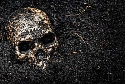 Skull in wet soil - p300m1101226f by Miriam Dörr