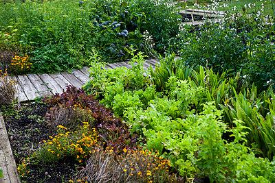 Green plants in garden - p312m1532950 by Lisa Wikstrand