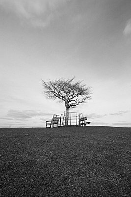Tree with two benches below in a field - p3313115 by Gail Symes