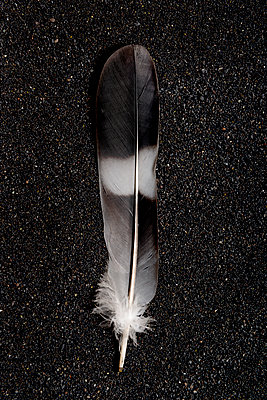 Feather - p451m971141 by Anja Weber-Decker