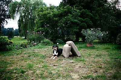 Hund - p1174m982941 von lisameinen
