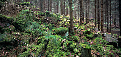 Forest in Sweden - p972m1136679 by Gerry Johansson