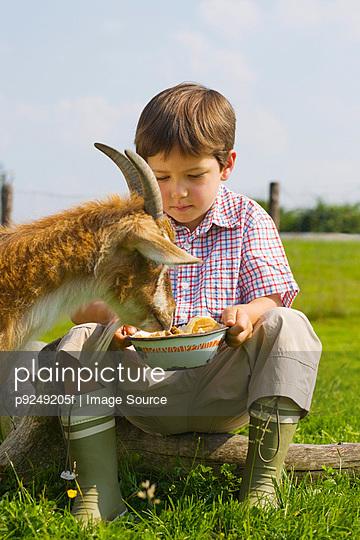 A boy feeding goat - p9249205f by Image Source