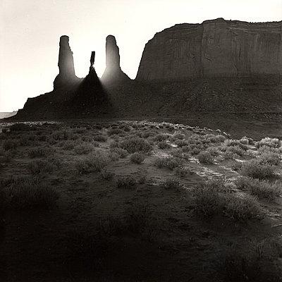 Desert plant - p1205m1023635 by Gerhard Trumler