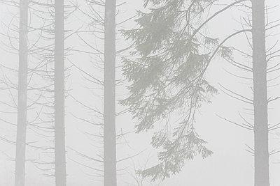 p312m974960f von Mikael Svensson