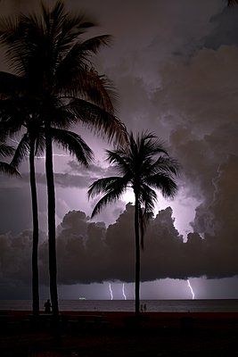 Lightning flashes offshore behind palm trees at the beach, Fort Lauderdale, Florida, USA - p429m1084659 by Chris Kridler