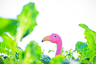 Flamingo in vegetable garden - p1149m1582817 by Yvonne Röder