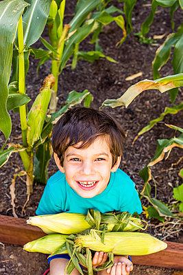 Mixed race boy picking corn in garden - p555m1411242 by Adam Hester