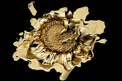 Sunflower painted in gold - p919m2195656 by Beowulf Sheehan