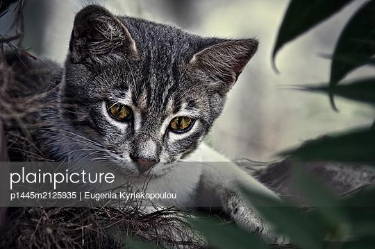 Portrait of tabby cat  - p1445m2125935 by Eugenia Kyriakopoulou
