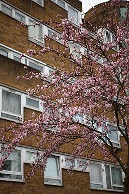 London Streets - p591m1091418 by Celine Marchbank