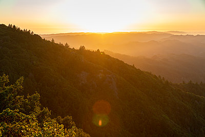Forest on Mount Tamalpais at sunset, California - p756m2211539 by Bénédicte Lassalle