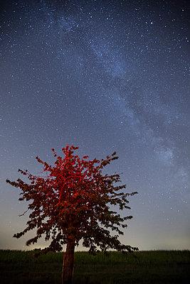 Tree illuminated by a red light under the Milky Way - p1682m2264037 by Régine Heintz